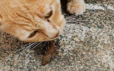 Comunicado sobre la problemática de los gatos asilvestrados