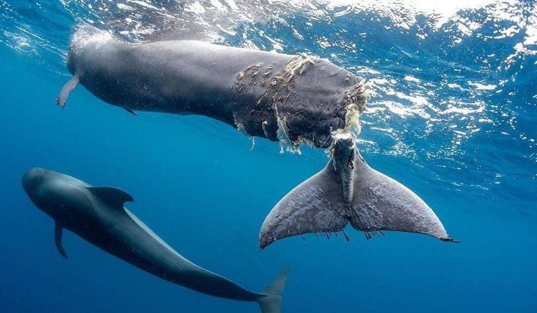 NOTA DE PRENSA: El Parlamento de Canarias llega con retraso a la celebración del Día Mundial de los Océanos, pero lo hace a lo grande